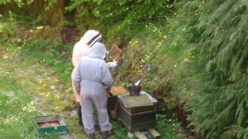 Beekeeping on Exmoor